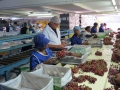 food-safety-services