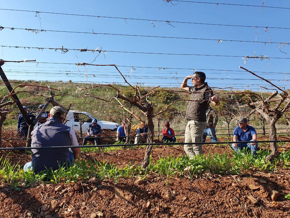 Pruning Training